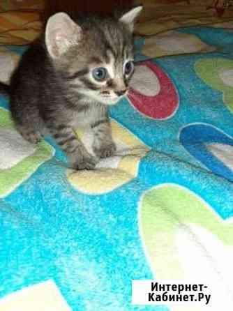 Котик Астрахань