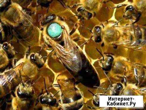 Пчеломатки Копейск