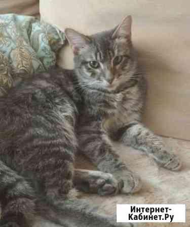 Котик найденыш Волжский Волгоградской области