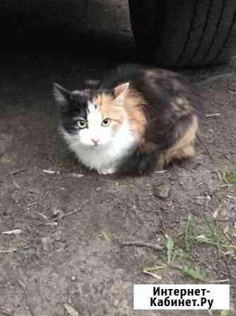 Кошечка ищет дом Ярославль