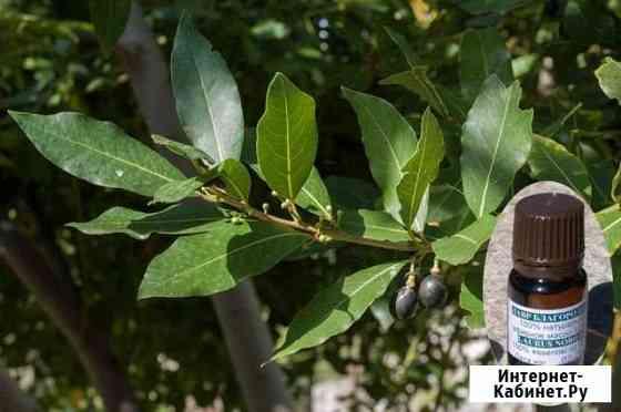 Эфирное масло лавра / Laurus Nobilis oleum 10 г Алупка