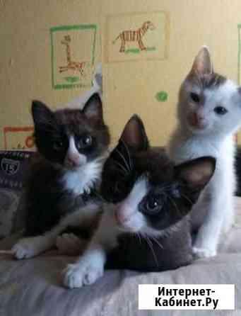 Отдаю очаровательных котят Иркутск