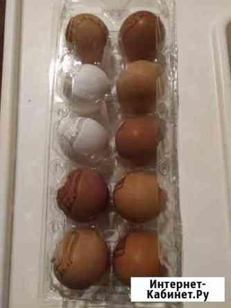 Яйцо инкубационное Курск