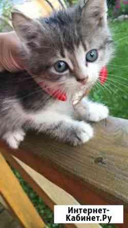 Котик, совсем маленький прибился к забору Смоленск