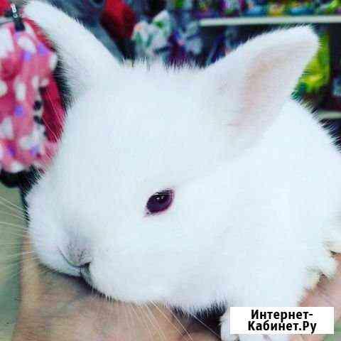 Кролик декоративный Набережные Челны