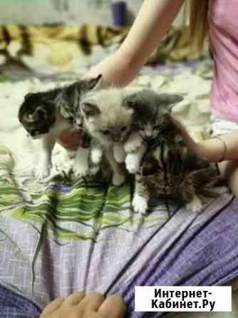 Кошка Новосибирск