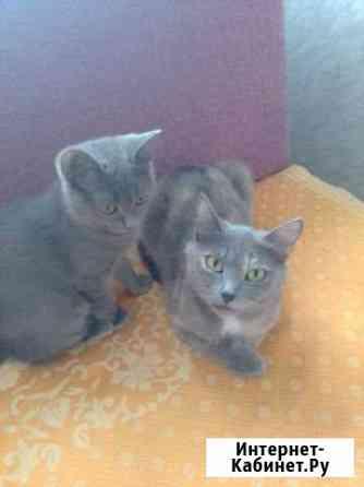 Кошка и котёнок мальчик Тюмень