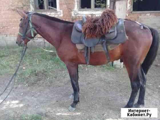 Лошадь Александровское