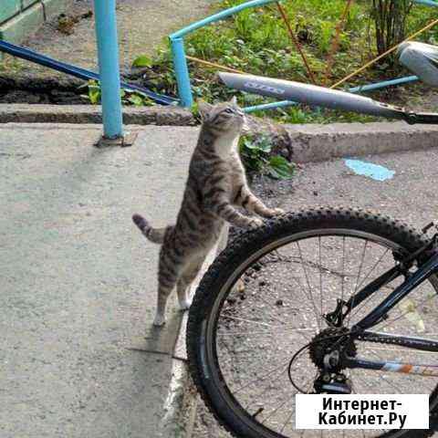 Котенок ждёт хозяина Томск
