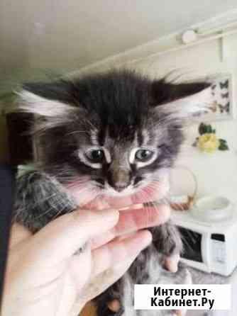 Отдам очаровательных котят в добрые руки Пенза