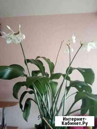 Цветы комнатные Киров