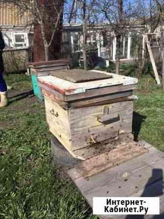 Пчёлы Радищево