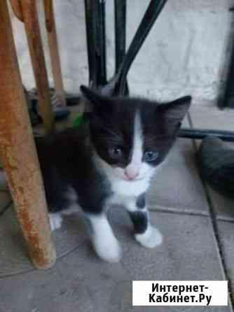 Котик Шахты