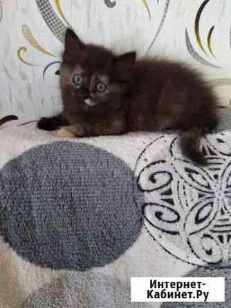 Котенок в добрые руки Кострома