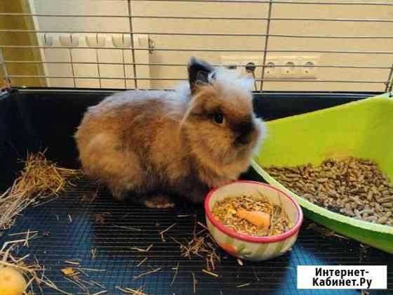 Кролик Москва