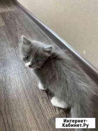 Котёнок Каменск-Уральский