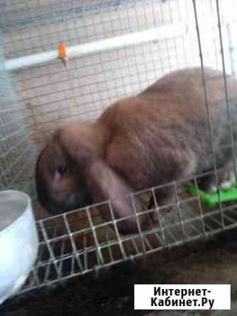 Кролики мясных пород Подольск