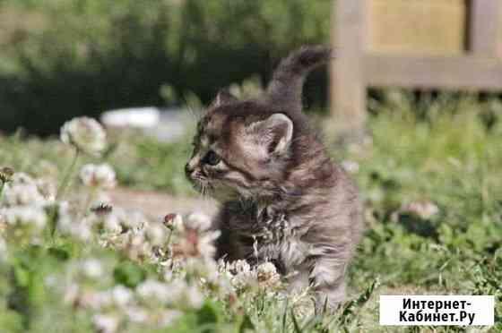 Кошка Сочи