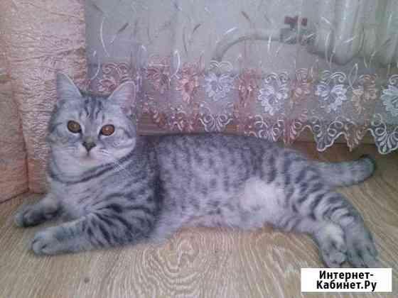 Вязка кот Киров