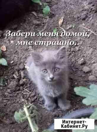 Котёночек в поисках лучшего дома Ставрополь