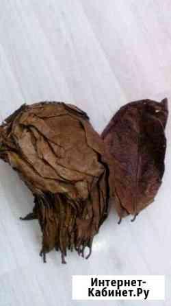 Листья индийского миндаля Хотьково