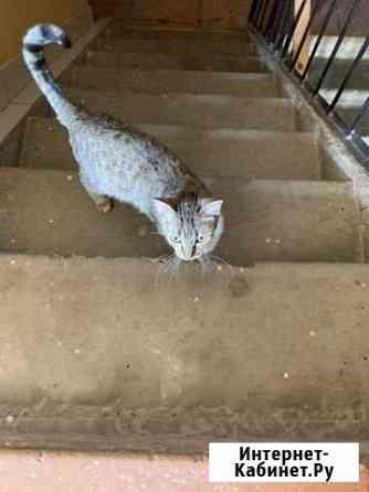 Полосатая кошечка ищет дом Томск