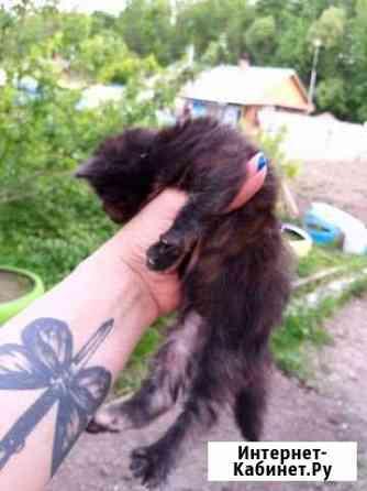 Котята В ответственные руки Хабаровск