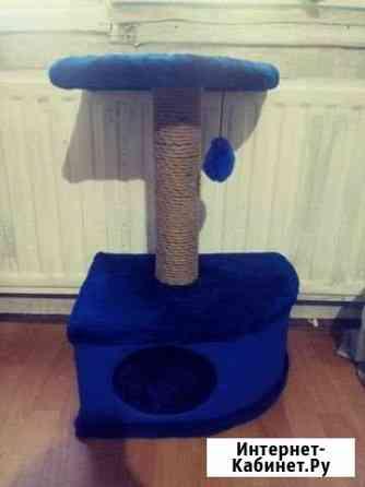 Дом для кошки Санкт-Петербург
