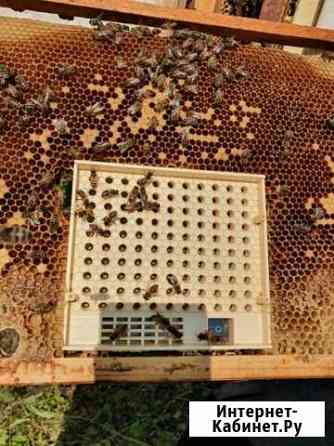 Пчелопакеты матки Магнитогорск