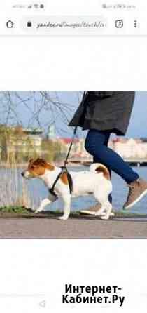 Выгул собак Стрежевой
