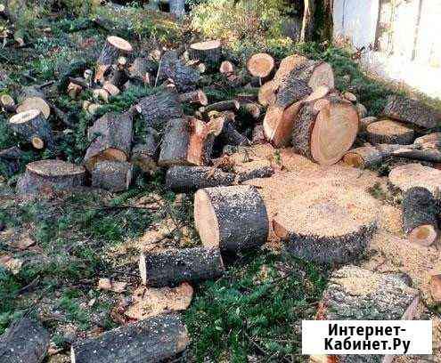Спил вырубка деревьев и Покос травы Назрань