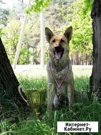 Дрессировка собак в Элисте. Зоогостиница Элиста