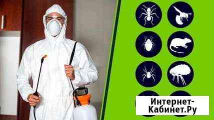 Дезинсекция, Уничтожение клопов и тараканов Йошкар-Ола