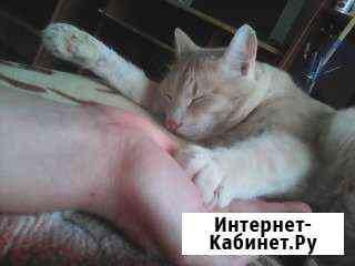Ветеринарный врач Красноярск