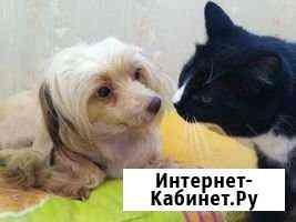 Домашняя передержка для кошки, собаки (зооняня) Санкт-Петербург