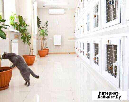 Гостиница для животных Сургут