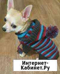 Свяжу на заказ одежду для собак и кошек Искитим