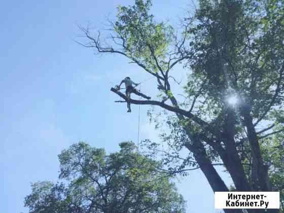 Спилить дерево. Обрезка ветвей Ярославль