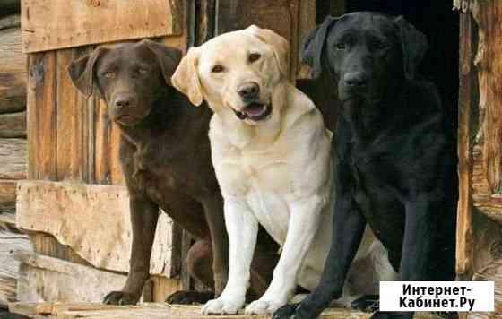 Ветеринарная помощь Миасс