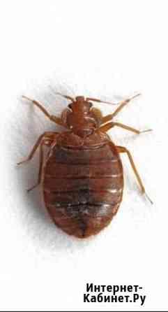 Уничтожение клещей,комаров,тараканов,клопов,мышей Самара