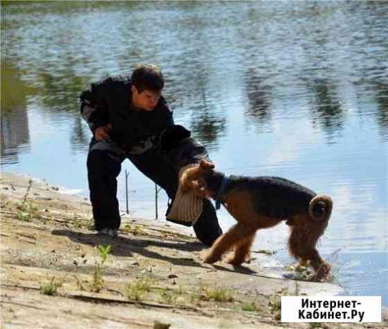 Качественная дрессировка собак Москва