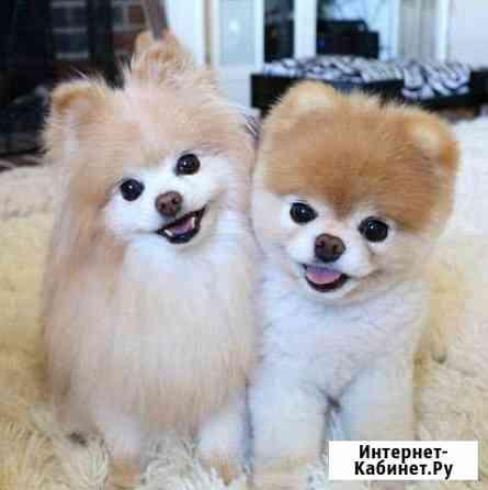 Стрижка собак и кошек Кириши