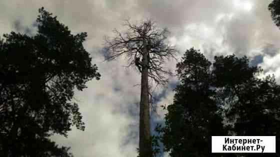 Спил деревьев Тольятти