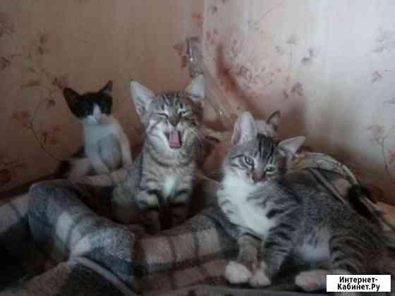 Котята с характерами. г. Орел Орёл