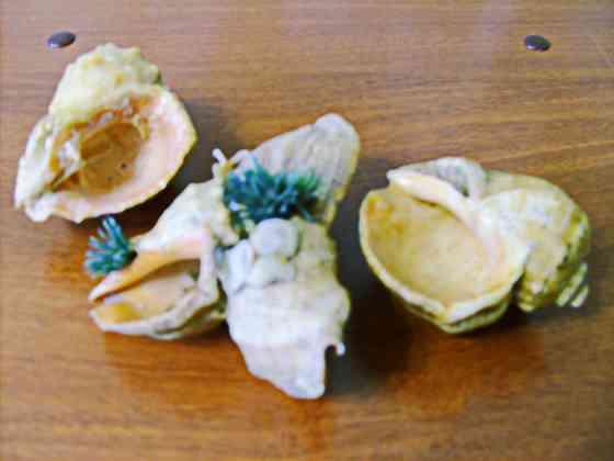 Ракушки на дно аквариума (5 шт) Самара