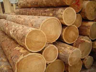Деловая древесина Екатеринбург