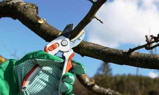 Профессиональная обрезка деревьев, винограда, кустов, туй, опыт более 30 лет Севастополь
