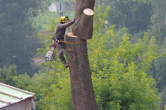 Спил обрезка деревьев без автовышки Новосибирск