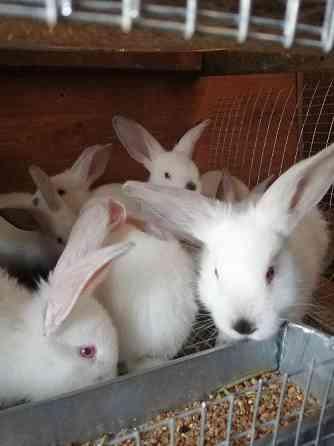Продам кроликов Краснодар