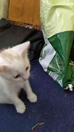 Котята в добрые руки Севастополь